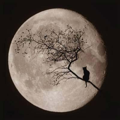 gat-negre-lluna-plena.png