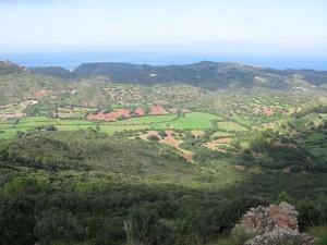 agroforest2